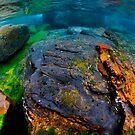 Underwater seascape by Carlos Villoch