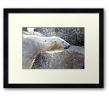 Polar bear1 Berlin zoo Framed Print