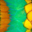 Parrotfish scales by Carlos Villoch