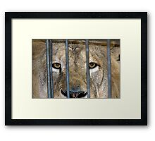 Lion1 Framed Print