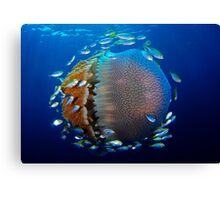 Jellyfish with fish Canvas Print