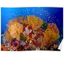 Colorful Corals - Tubbataha Poster