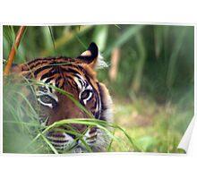 Tiger1 Poster