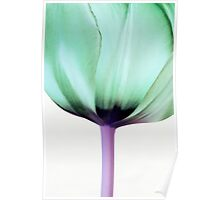 Green Tulip Poster