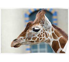 Giraffe1 Poster