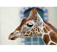 Giraffe1 Photographic Print