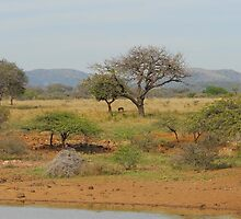 Hluhluwe Game Reserve, South Africa by Heather Thorsen