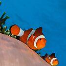 Coral Reef Close Ups by Carlos Villoch