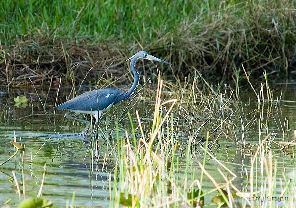 Heron on Loop Rd by Larry  Grayam