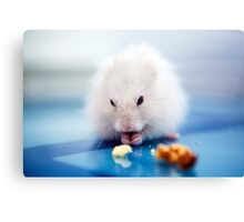 the little hamster Canvas Print