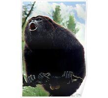 Howler Monkey Poster