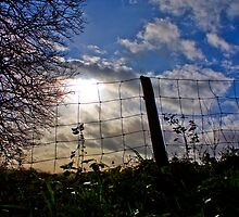 Fence in the Sun by Anna Leworthy