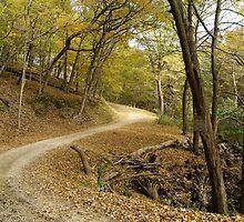 Diggin Hill Road by Richard Williams