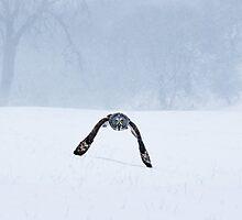 Skimming the snow by Mike Ashton