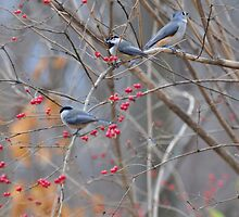 Two chickadees and a titmouse by mltrue