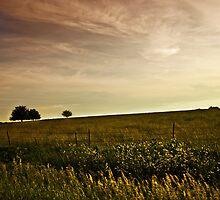 Rural Beauty by Jeff Golden