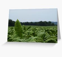 Tobacco Leaf Greeting Card