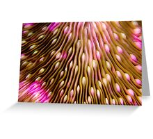 Coral texture Greeting Card