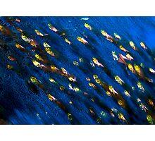 Glass Fish Photographic Print