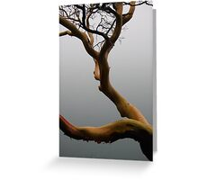 Arbutus tree in the fog Greeting Card