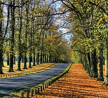 """Lime Tree Avenue, Clumber Park"" by Bradley Shawn  Rabon"