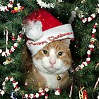 Happy Christmas...from Tiddles by Martina Fagan