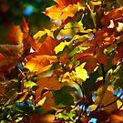 autumn colors by Phillip M. Burrow