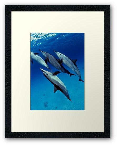 Dolphins by Carlos Villoch