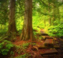 The Small Path Through the Forest by Tara  Turner