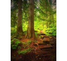 The Small Path Through the Forest Photographic Print