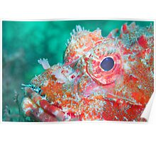Red Stonefish Poster