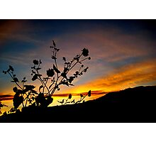 Reaching for Heaven Photographic Print