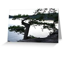 fir tree growing against the wind Greeting Card