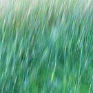 Wind in the grass by Karen Rich