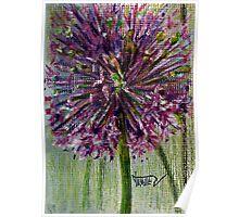 Ilium,purple Globe flower Poster