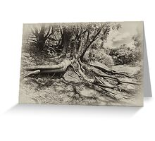 Tree in the Blackwood Greeting Card