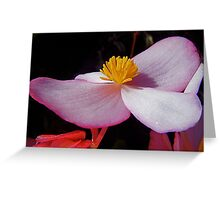 Begonia. Greeting Card