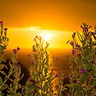 wild flowers coastal sunset by morrbyte