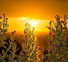 wild flowers coastal sunset by morrbyte