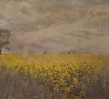 Canola On The Lachlan by garts
