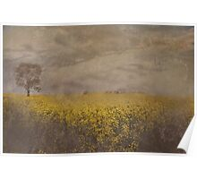 Canola On The Lachlan Poster