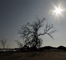 Tree of desolation by Hélène David-Cuny