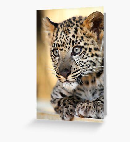 Snow Leopard Kitten Greeting Card