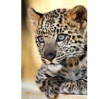 Snow Leopard Kitten Photographic Print