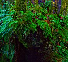 """Where the wild fern grows"" in Snoqualmie Eden by Robert C Richmond"