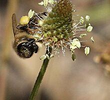 bee happy by beekeeper