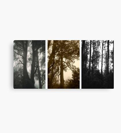 Misty trees at Sassafrass triptych Canvas Print