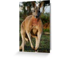 Powerful Red Kangaroo Greeting Card