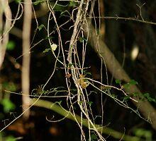 Fairy Woods by Sabine Jacobsen [SJArt]
