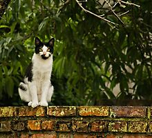 Cat On A Wall by TeresaB